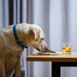 A dog sitting on a table Description automatically generated